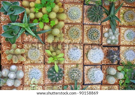 Variety of Cactus background