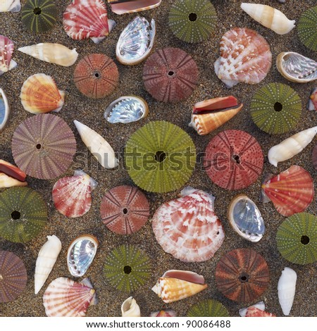 variety of colorful sea urchins and shells on wet sand