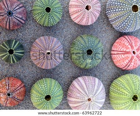variety of colorful sea urchins on wet sand