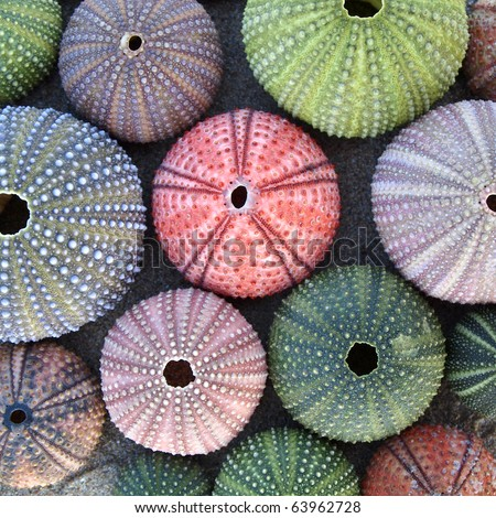 variety of colorful sea urchins on wet sand - stock photo