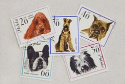 variety of dogs (cocker spaniel, French bulldog, boxer, airedale terrier, Polish lowland shepherd) on vintage canceled Polish post stamps placed casually on artist cotton canvas