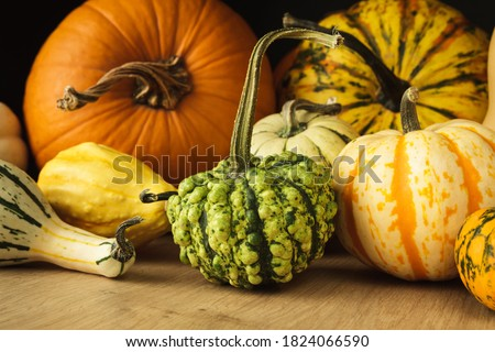 Variety of edible and decorative gourds and pumpkins. Autumn composition of different squash types on wooden table. Foto stock ©