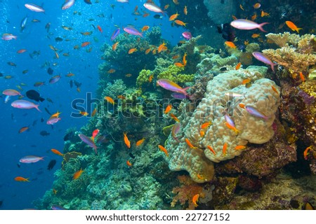 variety of fish and colorful coral of great barrier reef, australia