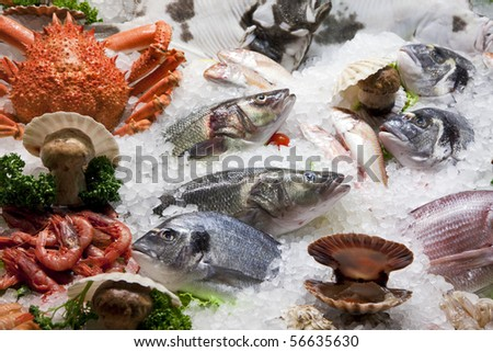 variety of fish and seafood on ice bed