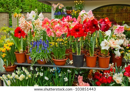 variety of flowers in pots on display in shop