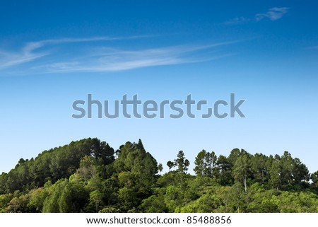 Variety of forest trees on clear sky