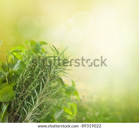 Variety of fresh herbs in the garden with bokeh lights