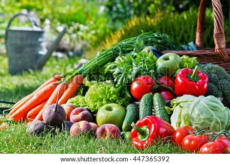 Variety of fresh organic vegetables and fruits in the garden. Balanced diet #447365392