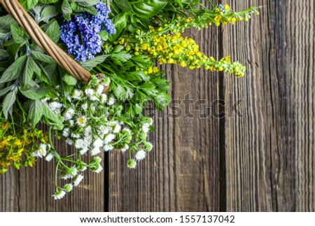 Variety of herbs, fresh garden herb on wooden table