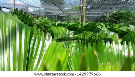 variety of ornamental plants, ornamental plants from Yogyakarta in Indonesia #1429979666