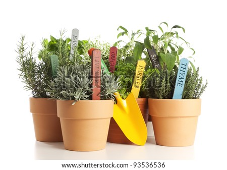 variety of potted garden herbs with shovel isolated on white
