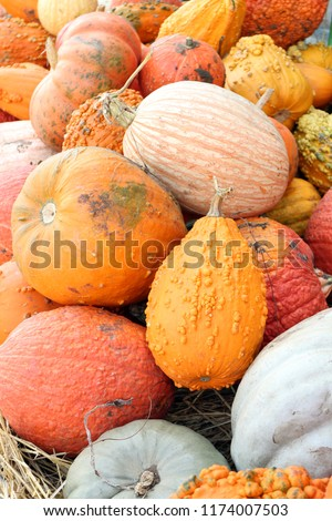variety of pumpkin and squash at the market place Stok fotoğraf ©