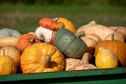 Variety of pumpkins and gourds for halloween, photographed on the back of a tractor in Wisley, Surrey UK on a sunny autumn day.
