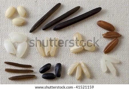 variety of rice grain on art canvas - three seeds from each kind including white and brown rice, long grain, arborio, black forbidden, and wild - stock photo