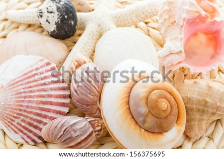 Variety of sea chells in different shapes. Photo stock ©