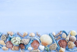 Variety of sea shells and nail shells on blue wooden background
