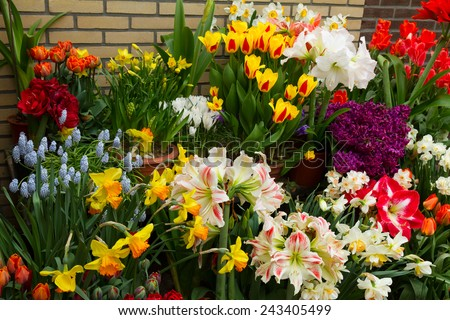 variety of spring flowers in pots on display in street shop