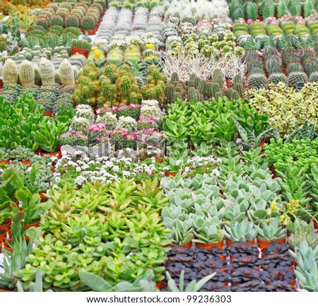 variety of succulents and catcus on sale from the florist inside a greenhouse