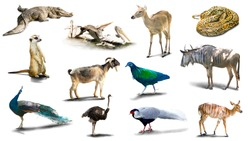 Various animal pictures are isolated on a white background  have shadows,Object have clipping path.
