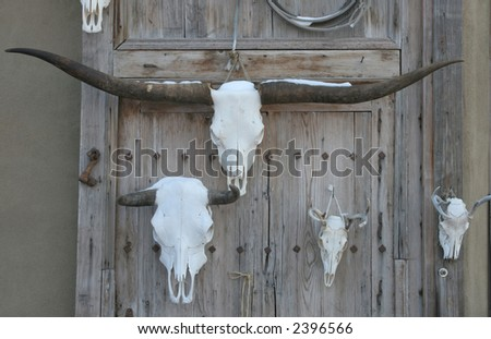 Various bleached skulls hanging on a wall at an outdoor market in New Mexico