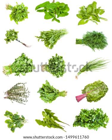 various bunches of fresh edible herbs (scallion, mizuna, mint, thyme, coriander, cilantro, basil, parsley, cress, dill, chard, dandelion, etc) isolated on white background