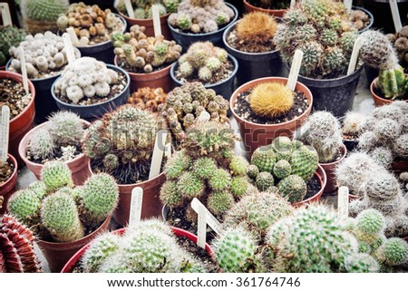 Various cacti mix in the greenhouse. Natural theme. Detail photo.