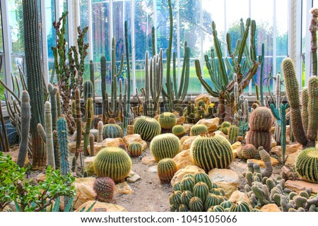 Various cactus in a glass greenhouse for protection in The Conservatory and Botanical Garden of the City of Geneva