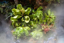 Various Carnivorous Plant growing well under indoor grow light with artificial mountain setup