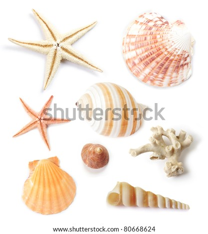 Various collection of sea shells with coral and starfish on white background.