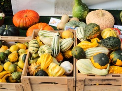 various decorative vegetables on a market, ready to be displayed