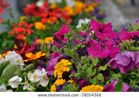 Various different flowers with vivid colours in bright summer light