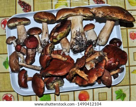 Various edible mushrooms (boletus edulis bull, borowik szlachetny, prawy, , leccinum scabrum, kozak, kozlarz babka, imleria badia, podgrzybek brunatny) on the table. Found in the polish forest. Zdjęcia stock ©