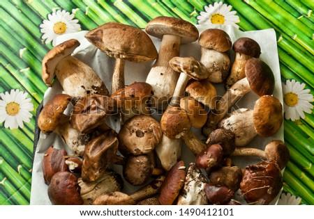 Various edible mushrooms (boletus edulis bull, borowik szlachetny, prawy, prawdziwek, leccinum scabrum, kozak, kozlarz babka, imleria badia, podgrzybek brunatny) on table. Found in the polish forest. Zdjęcia stock ©