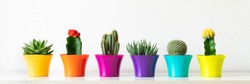 Various flowering cactus and succulent plants in bright colorful flower pots in a row against white wall. House plants on white shelf panoramic web banner.