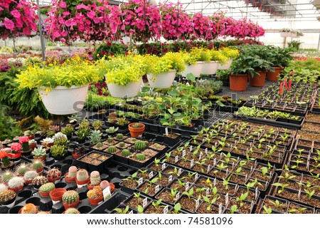 Various flowers and cactus plants inside nursery