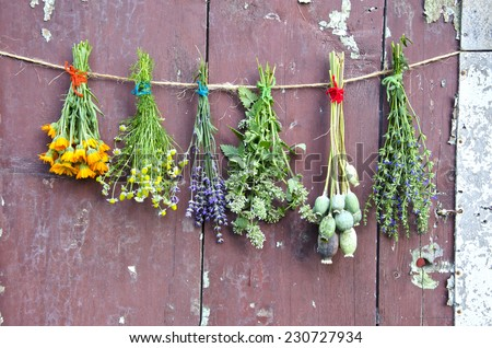 various flowers and medical herb bunch on wooden old grunge farm barn wall