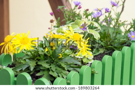 various flowers in a flower box / Flowers