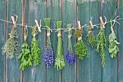 Various fresh herbs hanging in bundle on an old hut
