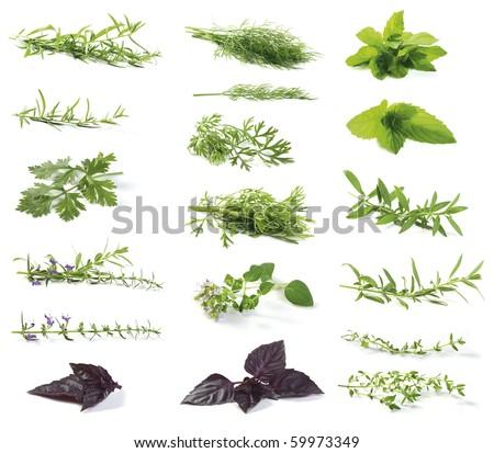 Various fresh herbs isolated on white. Tarragon , Peppermint (mint), Dill, Oregano, Coriander (Coriandrum sativum),Basil, Hyssop (Hyssopus officinalis ). - stock photo