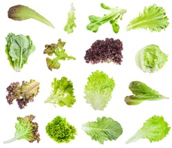 various fresh leaves of lettuce (lactuca) isolated on white background