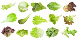 various fresh leaves of lettuce vegetables isolated on white background