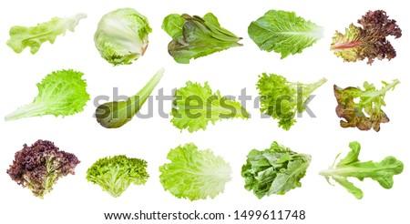 various fresh leaves of lettuce vegetables isolated on white background Stock photo ©