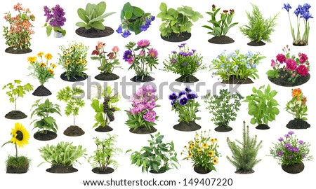 Various garden plants and flowers grow on the soil  compost heap collage set isolated  #149407220