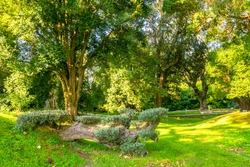 Various green  trees in dendrological park in Shekvetii. Georgia.2020.