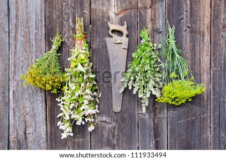 various herbs bunches on old wooden wall