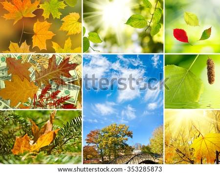 various images autumn landscapes closeup - Shutterstock ID 353285873