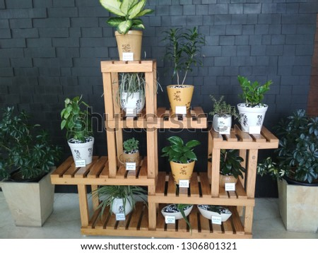 various indoor plants like aloe vera plant, money plant #1306801321