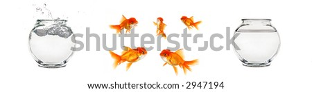 Various Isolated Goldfish Elements to Create Your Own Concept