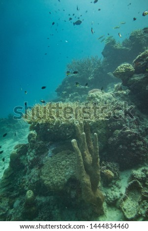 Various kind of coral under the sea in Palawan Philippines #1444834460