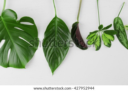 Various leaves on white wooden background #427952944